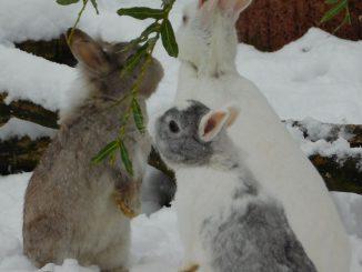 Weihnachten auf dem Tierschutzhof